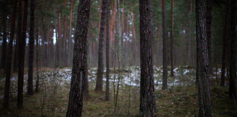 Erametsaliit peab säästlikku metsamajandamist väga tähtsaks