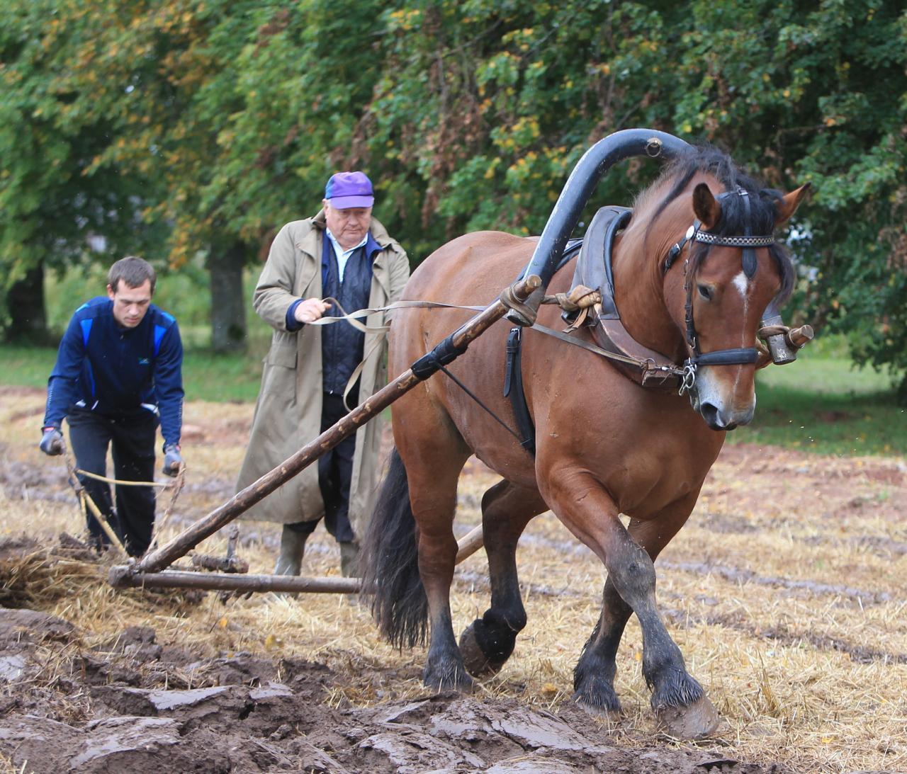 Hobusega kündmine