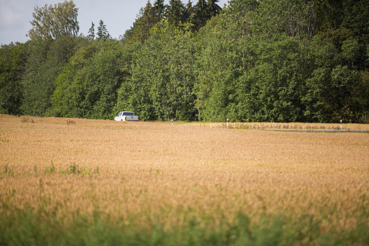 maaelu, põld, suvi, vili