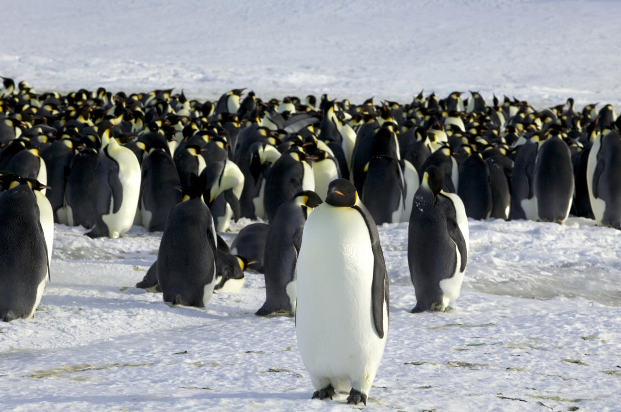 """Lätlased """"pingviinide paraadi"""" ei pea – eestlastele on see mõttekohaks, sest ühiskonda ühendavat rolli pole sest sündmusest kujunenud"""